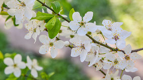 Seasonal spring flowers trees background stock photo