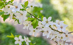 Seasonal spring flowers trees background royalty free stock photography