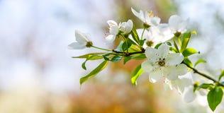 Seasonal spring flowers trees background stock image