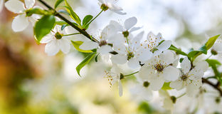 seasonal spring flowers trees background stock photos