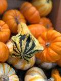 Seasonal squash close up Stock Photography