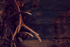 Seasonal stag antlers on dark woodgrain. Deer antlers and fallen brown leaves against a rustic woodgrain background in a winter seasonal theme royalty free stock photos