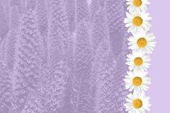 Seasonal Summer Daisy and Grass Background Stock Photography