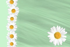 Seasonal Summer Daisy and Grass Background Royalty Free Stock Images