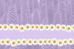Seasonal Summer Daisy and Grass Background stock image
