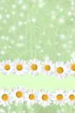 Seasonal Summer Daisy and Grass Background Stock Photo