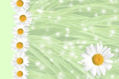 Seasonal Summer Daisy and Grass Background Royalty Free Stock Photo