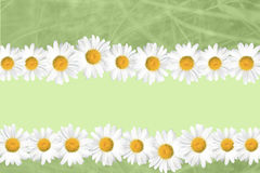 Seasonal Summer Daisy and Grass Background Royalty Free Stock Photos