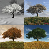 Seasonal time laps. 3d render of a cherry tree during the four seasons Royalty Free Stock Photography