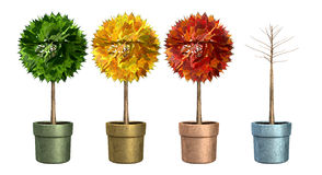 Seasonal Trees In Pots Stock Photo