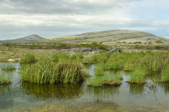 Seasonal Turlough, Mullaghmore. Seasonal lake or Turlough dries out in the spring, Mullaghmore, The Burren National Park, Co. Clare, Ireland Stock Photos
