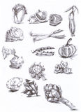 Seasonal vegetables. Hand drawn (with good precision level of detail) series of FRUITS and VEGETABLES Royalty Free Stock Image