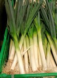 Basket of fresh leeks. Very fresh green and white long leeks in green basket on market stall Stock Image