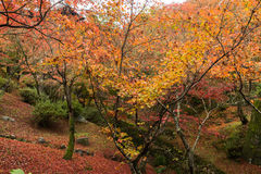 Seasonal view. In fall with red maple leaves Stock Photo