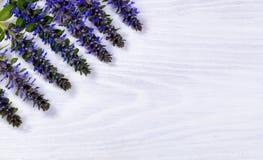 Seasonal wild blue flowers white wood background Stock Images