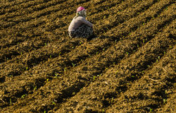 Seasonal women worker in agricultural production sector in Anatolia Royalty Free Stock Photos