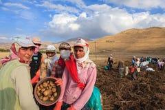 Seasonal women workers Stock Photos