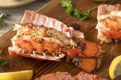 Seasoned Baked Lobster Tails Stock Image