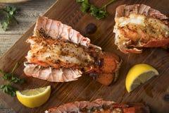 Seasoned Baked Lobster Tails Stock Photos