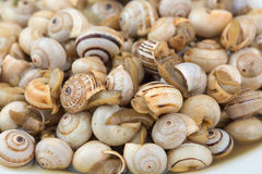 Seasoned boiled snails Stock Photography