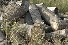 Seasoned firewood. Tumbled pile of logs of seasoned firewood Royalty Free Stock Images