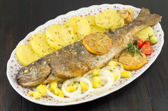 Seasoned roasted trout on a plate Stock Photography