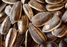 Seasoned sunflower seeds Royalty Free Stock Photography