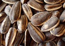 Seasoned sunflower seeds. Background royalty free stock photography