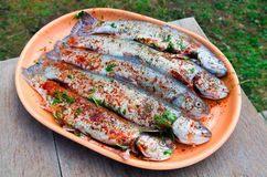 Seasoned trout Royalty Free Stock Image