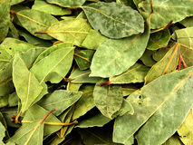 Seasoning, bay leaf Royalty Free Stock Photography