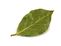 Seasoning, bay leaf Stock Photography