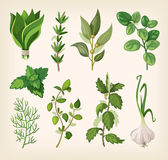 Seasoning and dressing herbs Royalty Free Stock Images