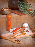 Seasoning - Dry and fresh spices Royalty Free Stock Photo