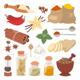 Seasoning food herbs natural vector ingredient. Royalty Free Stock Photography