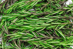 Seasoning fresh rosemary Stock Image
