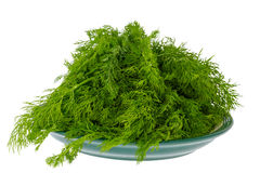 Seasoning green dill on a plate Royalty Free Stock Photo