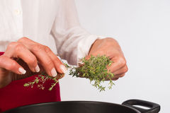 Seasoning with thyme Royalty Free Stock Images