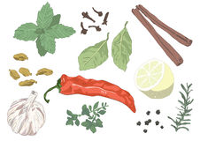 Seasonings Stock Photo
