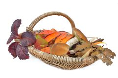 Seasonnal basket Royalty Free Stock Photo