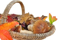 Seasonnal basket Royalty Free Stock Photos