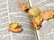 Seasons. Dried rose petals on Bible verses from Ecclesiastes stock images