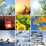 Seasons. Collage of the four seasons: spring, summer, autumn, winter royalty free stock photo