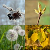 Seasons. Four seasons in macro. Collage Royalty Free Stock Images