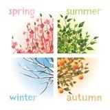 Seasons. 4 seasons in 1 tree Royalty Free Stock Image