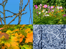 Seasons background Royalty Free Stock Image