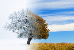 Seasons change. Digital composite image of a lone tree landscape with seasons changing from fall to winter