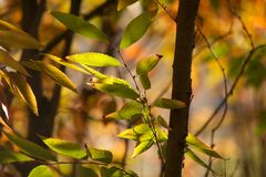 Seasons changing. The beginning of spring leaves in the concert jungle of Atlanta Ga Stock Photo