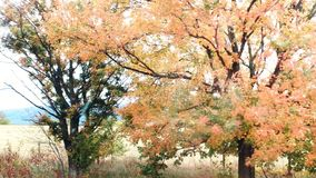 Seasons changing colors. Fall season changing colors tree going bare stock image
