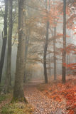 Seasons changing from Summer into Autumn Fall concept shown in o Royalty Free Stock Photo
