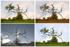 Seasons of a Dying Tree Stock Photography